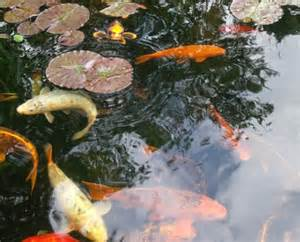Fish pond feature the most important factor is the pond size itself