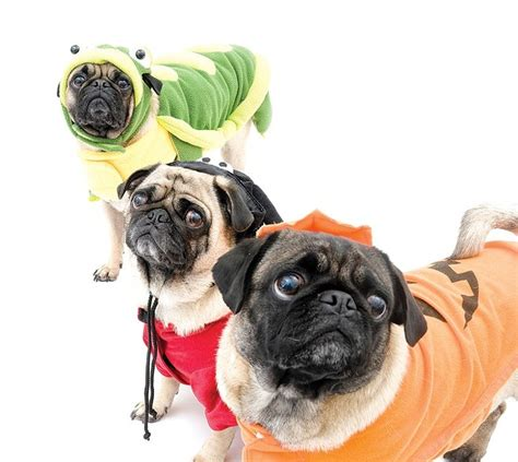 what do pugs eat and drink things to do tonight blogtown portland mercury