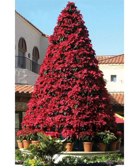 poinsettia christmas tree frame www imgkid com the