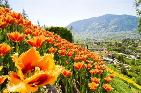 giardini di sissi merano merano i giardini di sissi aprono i cancelli