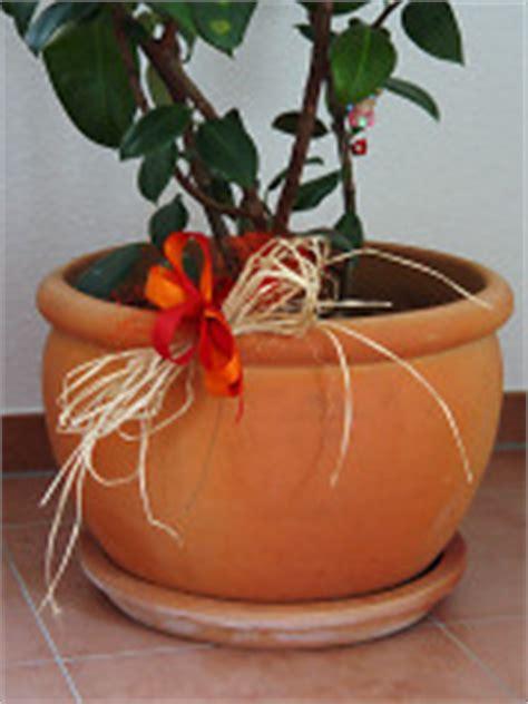 Blumentöpfe Aus Ton 388 hausbau erfahrungen 187 pflanzen ein fertighaus entsteht