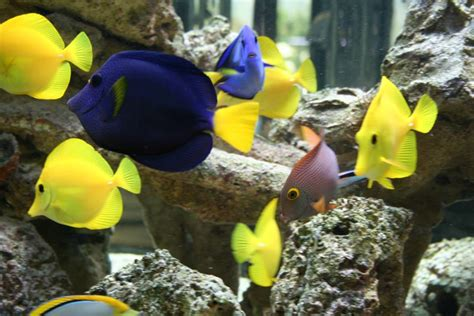fish house near me fish house near me 28 images find aquarium 28 images home accessories cool fish