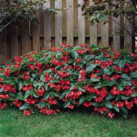 fiori da giardino fiori da giardino guida con le variet 224 vivono anche