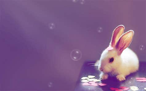wallpaper cute rabbit cute bunny rabbit wallpaper hd desktop wallpapers 4k hd