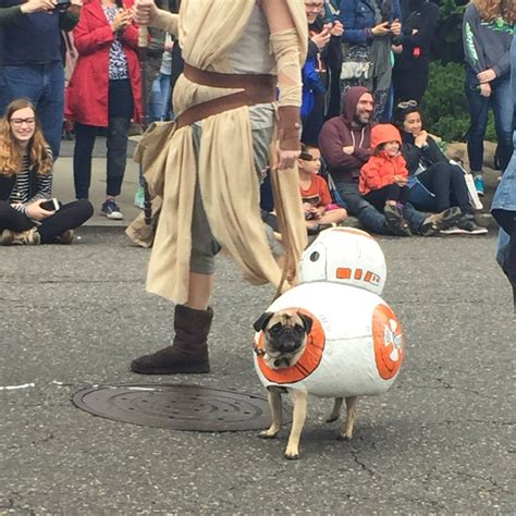 pugs in wars costumes pugs on parade in wars costumes is a thing that happened nerdist