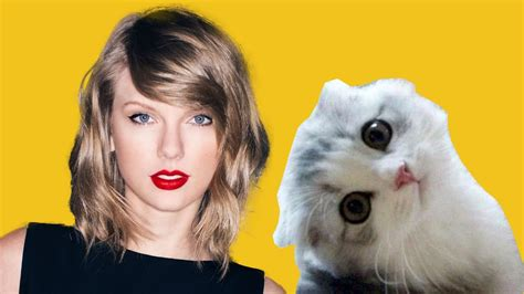 taylor swift cat video taylor swift s cats olivia and meredith cat videos