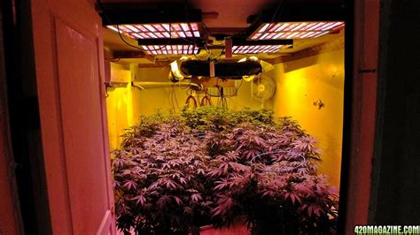 growing with led lights forum mars hydro led grow light discussion page 21
