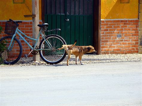how to house train a stray dog stray dogs becoming epidemic in mexico city all pet news