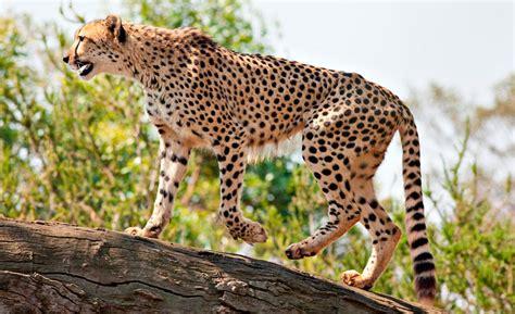 imagenes de animales rapidos los animales m 225 s r 225 pidos del mundo