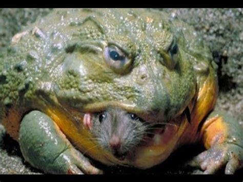 12 weirdest frogs youtube
