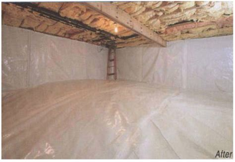 Why Do I Have Mold in My Crawl Space?   DocAir