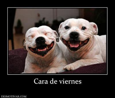 imagenes de feliz viernes sexis imagenes chistosas de feliz viernes fotos e imagenes