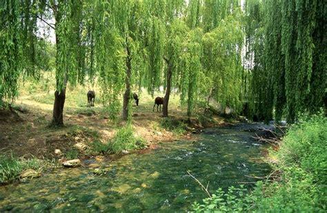 imagenes extrañas en el bosque el bosque web oficial de turismo de andaluc 237 a