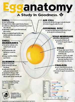 carbohydrates in 6 eggs 8 simple ways to nutrition one large egg