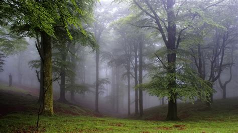 wallpaper 4k forest forest covered with fog 4k wallpaper wallpapers 4k 5k 8k
