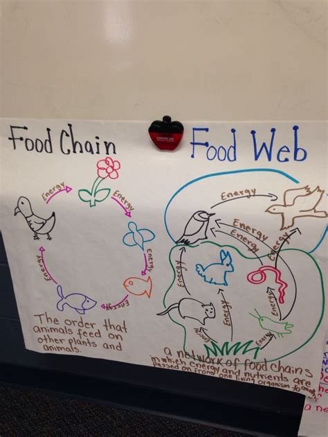 food webs on pinterest food chains science and food 524 best science food chains food webs images on