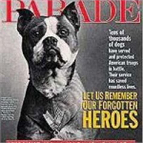 Sergeant Stubby Owner Boston Terriers