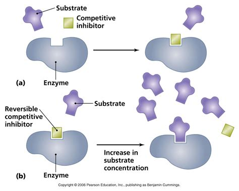 protein vs enzyme enzymes
