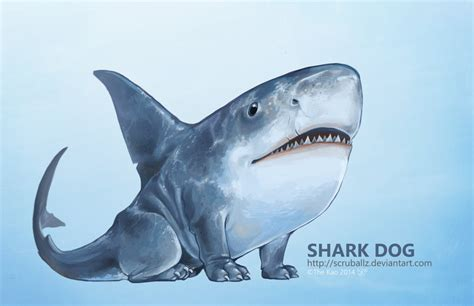 shark puppy shark by thek40 on deviantart