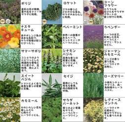 Herb Cabinet 楽天市場 送料無料 25種類の中から 6種類選べるハーブ種 メール便でのお届けです みつのぶ