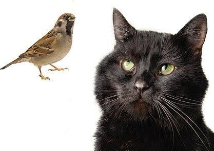 cat and bird black beautiful birds images free stock photos 9 282