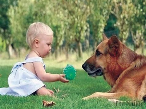 dogs protecting babies dogs may protect babies