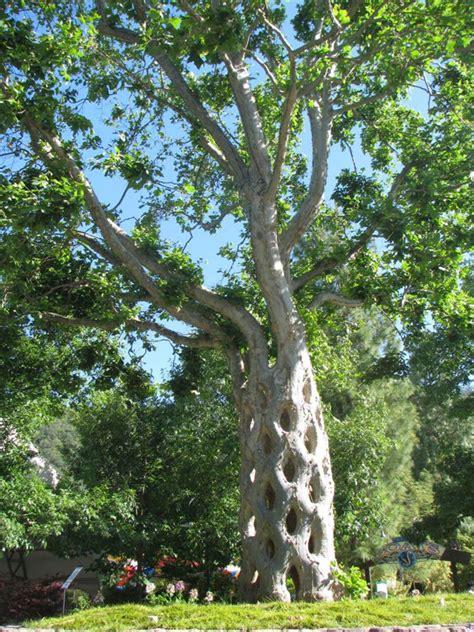 amazing tree creative visual art photos of amazing trees