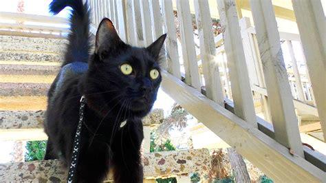 Black Cat top 10 black cat facts