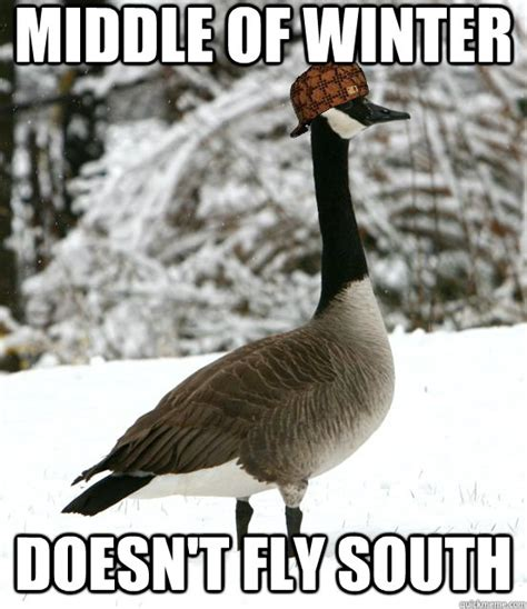 Goose Meme - canadian goose meme pictures to pin on pinterest pinsdaddy