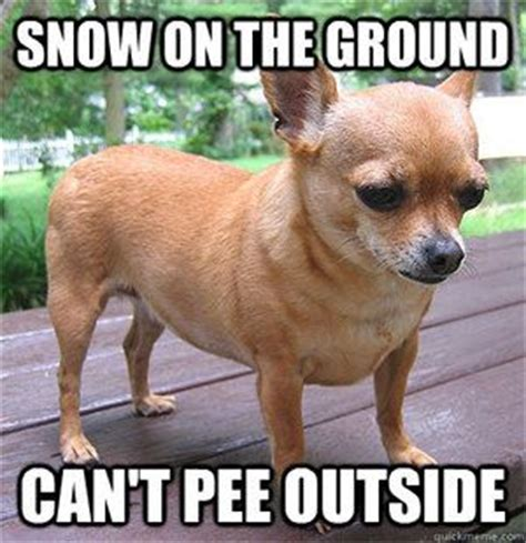 Funny Chihuahua Memes - barack o on