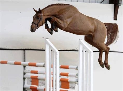 Did Stapp Jump Because He Got High by 43 Best Images About Jumping On
