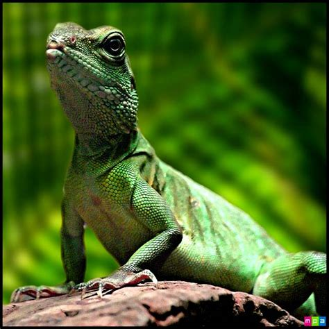 information of animal lizard pets