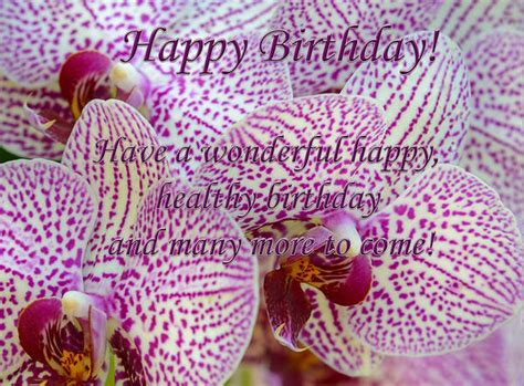 happy birthday card  orchids gallery yopriceville high quality images  transparent