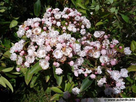 Plante Terre Acide by Les Amis Des Plantes De Terre De Bruy 232 Re