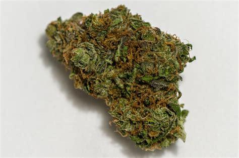 black strain black domina marijuana strain reviews allbud
