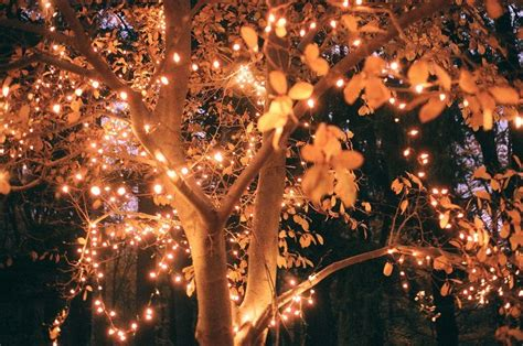 tree with twinkle lights lights