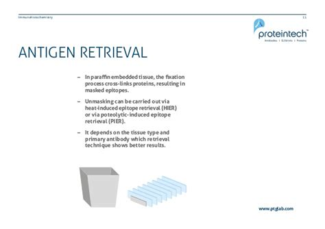 antigen retrieval frozen sections how to optimize your immunohistochemistry experiment