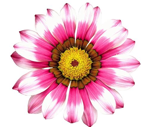 flower bloom free pictures pink flower 109 images found