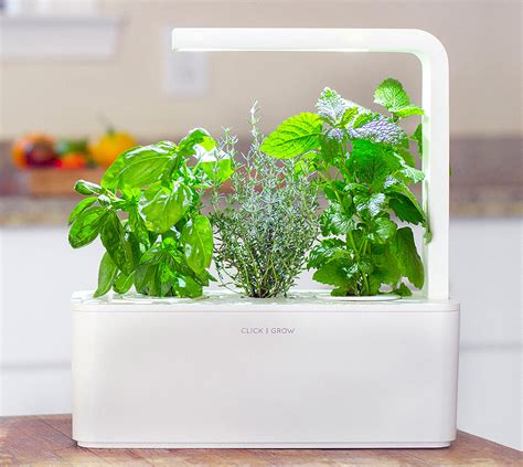 click and grow smart herb garden w l 3 refills basil click and grow smart herb garden умный сад от 7 990