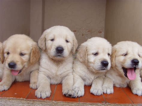 how can a puppies how soon can puppy begin jim burwell s petiquette