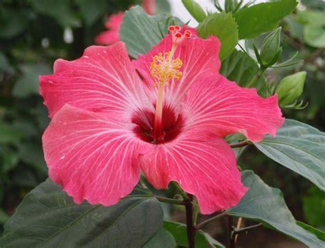 Imagenes Bonitas Flores | zeke s bilingual blog muchas flores bonitas