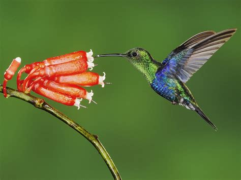 beautiful hummingbird 1600x1200 wallpapers hummingbird
