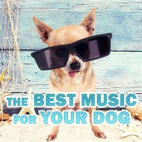 best music for relaxing the best music for your dog relaxing music