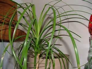 Common Apartment Plants Best Common Indoor Plants Design Ideas Kl12m 19022