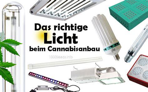 grow beleuchtung die beleuchtung cannabispflanzen 1000seeds