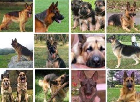 perros todas clases perro de todas las razas imagui