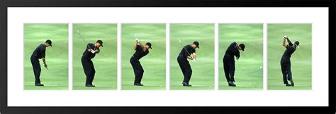 tiger woods 2001 swing sports photos pictures prints sports spgssgf001s