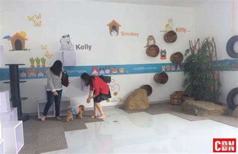 pet kingdom hotel hewan  tangerang cendana news