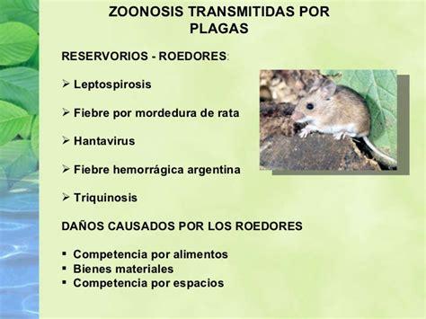 cadena epidemiologica psitacosis disertaci 243 n sobre zoonosis urbanas