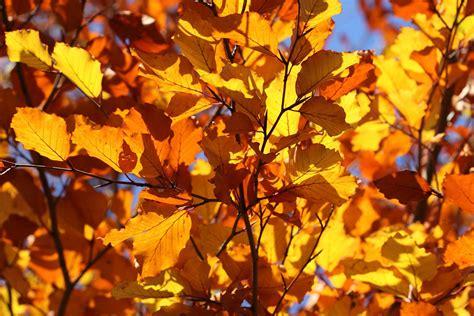 fotobox le immagini dei 8869654796 autunno foto di paesaggi spettacolari